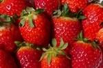 fraise image à la une blog